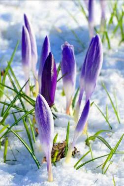 В предчувствии Весны!